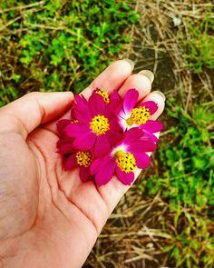 Uma pequena paixão por flores 💞