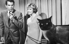 That Darn Cat - I also loved Dean Jones!