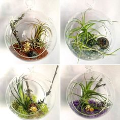 The ultimate guide to buying, caring and displaying air plants - Geometric Skies Rental House Decorating, Apartment Decorating For Couples, Air Plant Terrarium, Glass Terrarium, Hanging Terrarium, Air Plant Display, Plant Decor, Hanging Air Plants, Indoor Plants