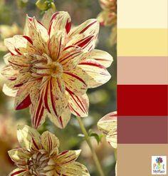 Color Palette Inspiration - Warm Dahlia