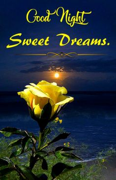 Good Night Beautiful, Romantic Good Night, Good Night Gif, Good Night Image, Good Night Quotes, Good Night Greetings, Good Night Wishes, Good Night Sweet Dreams, Night Pictures