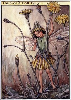 The Cat's Ear Fairy, painted by Cicely Mary Barker for the first edition of her book 'Flower Fairies of the Wayside' (1948).  For production reasons, this illustration no longer appears in the book today.  										   																										Author / Illustrator  								Cicely Mary Barker