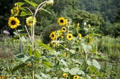 Blackberry Farm: Here Comes the Sun