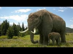 An American Mastodon mother and calf from the fantastic BBC documentary series Ice Age Giants Elephant Nature Park, Elephant Sanctuary, Prehistoric World, Prehistoric Creatures, American Lion, Uk Tv Shows, The Wooly, Dire Wolf, Dinosaurs