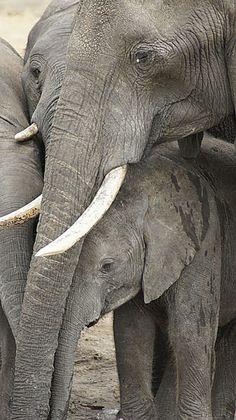 Elephants in Zimbabwe - Hwange National Park