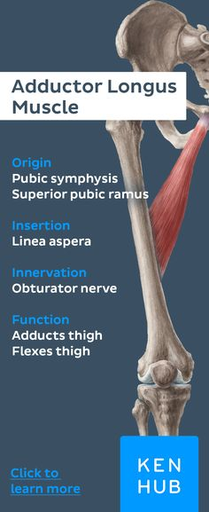 With our #muscle facts you can #learn about the human body efficiently and revise your favorite #muscles!