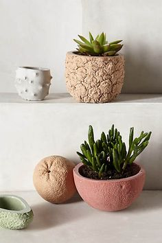 Stone Fruit  Planter#Anthropologie #Pintowin Outdoor decorating ideas Bright colors and calming neutrals Red, Orange, Blue, Green, Yellow, White & Grey