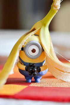 Hut banana