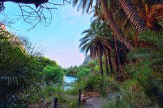 Palm forrest in Preveli #nature #river #preveli #Crete  #Greece #beach