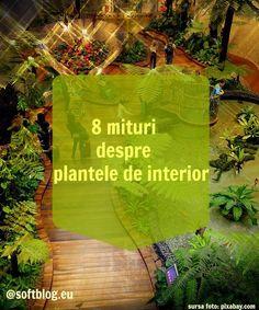 8 mituri despre plantele de interior