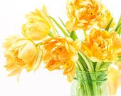 Yellow Tulips, Ball Jar, Double Tulips, Yellow, Flower Photography, Color, Fine Art, Dining Room, Bedroom, Bathroom, Wall Decor, Floral