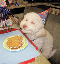 14 Funny Gifs To Chucklify Your Crazy Day Mignon Smiling Animals Smiling Dogs