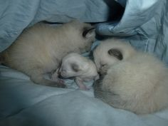 D Chapin's cats ~ Momma had two babies and then a third two weeks later