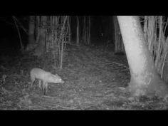 Trail Camera, Horses, Animals, Popular, Youtube, Animales, Animaux, Animal, Popular Pins