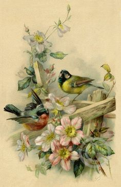 Victorian Birds in the garden Print Old time pink Roses bird in flight wall decor vintage rose 1905 Giclee Art 1218 Rose Vintage, Vintage Rosen, Art Vintage, Vintage Paper, Vintage Flowers, Vintage Style, Vintage Wallpaper, Illustration, Bird Pictures