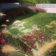 Hoy en nuestra casa de Malaga. El jardín esta precioso. Y aquí en Inglaterra lloviendo!