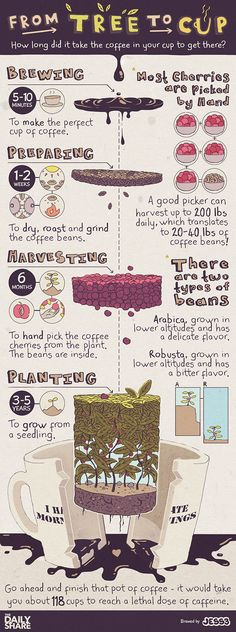 Turner - National Coffee Day Celebrating National Coffee Day on September this infographic explores the long journey our coffee undertakes to get from tree to cup. Coffee Facts, Coffee Quotes, Coffee Signs, Coffee Cafe, Coffee Drinks, Coffee Shop, Espresso Coffee, Barista, Coffee Process