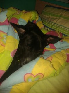 my dog is sleeping in my bed <3