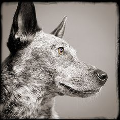 dog photographers - Google Search