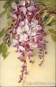 Branch with Purple Flowers C. Klein