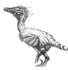 Rendering of Linheraptor exquisitus by Alain Bénéteau