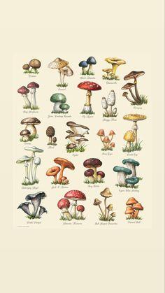 Botanical Drawings, Botanical Illustration, Botanical Prints, Photo Wall Collage, Picture Wall, Collage Art, Wall Prints, Poster Prints, Mushroom Art