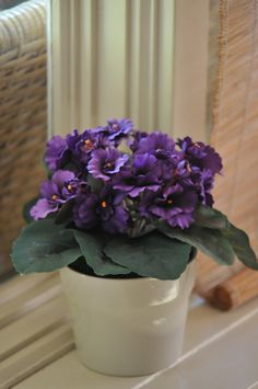 A pot of African Violet plant by BudsnBloomz on Etsy, $29.99