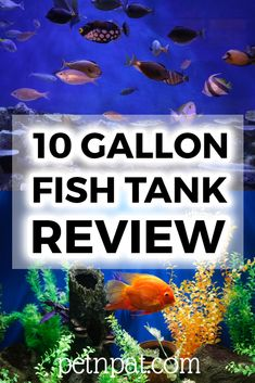 The best 10 gallon fish tank - 10 gal kits and standalone tanks. What fish are best for a 10 gallon aquarium? Animal Quotes, Animal Memes, Funny Animals, Aquarium Design, Aquarium Ideas, Aquarium Fish Tank, Aquarium Stand, Fish Tank Themes, 10 Gallon Fish Tank