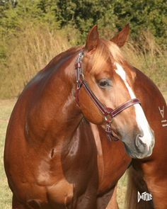 Google Image Result for http://branchsquarterhorses.com/Images/CatandDulce_head.jpg