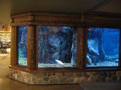 Fish tank aquarium, in a finished basement from the looks of it Cool Fish Tanks, Saltwater Fish Tanks, Saltwater Aquarium, Aquarium Fish Tank, Planted Aquarium, Home Aquarium, Aquarium Design, Aquarium Ideas, Salt Water Fish