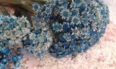 Flor Sempre Viva Azul Mix  Flor seca