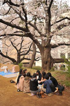 Tokyobling's Blog Sakura – Shinjuku and Yotsuya CherryBlossoms