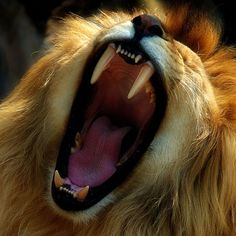 Listen to Him roar, trying to get your attention!  God loves you!  Jesus loves you!  =)  He really does!