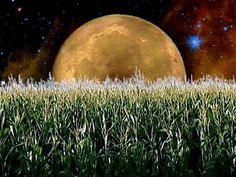 Happy Full Moon ! In some Native American cultures the August Full Moon is known as the Green Corn Moon, so today we are honoring the Corn Mother and other Grain Goddesses:  Iyatiku, Selu, The Corn Maidens, Yellow Woman, Chicomecoatl, Demeter & Persephone, Zaramama, Ukemochi, Annona, Dewi Sri, Nidaba, and Ashnan. http://www.inhername.com