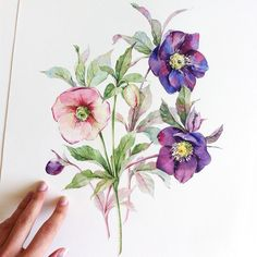 The selection of watercolor flowers below is by Moscow, Russian Federation based artistNatalia Tyulkina. She specialises in surface design and watercolor