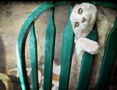 40 chats qui regrettent leurs choix  2Tout2Rien