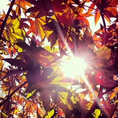 The Ripley Garden is the place to be to see #fall color on the #NationalMall. Pictured: Castor bean 'Carmencita'