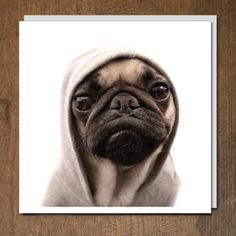 Pug Life by C J Foeckler for 1000 Words, Urban Graphic Ltd.