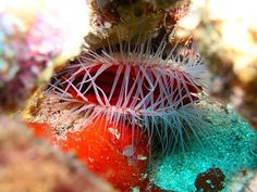 Rough file clam 👍🏽❤️#aquanautsgrenada #scubadiving #rebreather #ccr #wreckdiving #wreck #puregrenada #discovergrenada #grenada #reef #reefdiving #snorkeling #divegrenada  #scubadiver #padi #island360 #paditv #padidiver #scubadivingmag #travel #divetravel #sportdiver #scubapro #sgu #travelandleisure #scubadivers #travelingtheworldd #bg_underwater