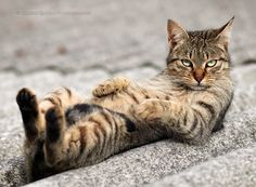 Yo. #catober
