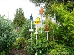 Garden Ideas with Bird Houses   Visit to Ed Hume's Garden