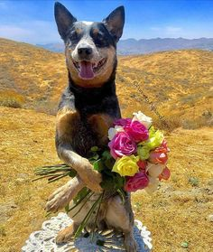 💐💐💐Happy Mothers day!💐💐💐              💕💝Luv Rogue💝💕 #happymothersday #mothersday from Fun With Pup And Jane