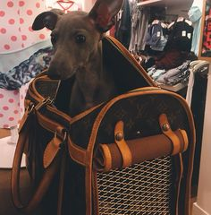 Norman says he doesn't like he's new bag