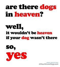 are there dogs in heaven? • from  APlaceToLoveDogs.com • dog dogs puppy puppies cute doggy doggies adorable funny fun silly photography typography quotes