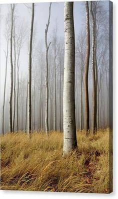 Tree Canvas, Canvas Art, Canvas Prints, Prints For Sale, Art For Sale, Got Print, Photo Archive, Fine Art America, Wall Art