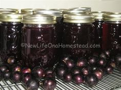 Here& a super delicious and easy muscadine jelly recipe you& gotta try the next time you get your hands on a bunch of muscadines! Wine Jelly, Grape Jelly, Jam And Jelly, Jelly Jelly, Jelly Recipes, Jam Recipes, Canning Recipes, Canning Tips, Yummy Recipes