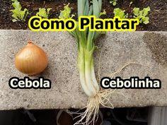 Como Plantar Cebolinha e Cebola em Vaso - YouTube