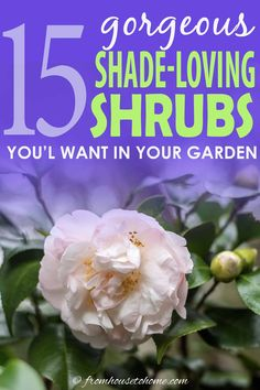 Find out which bushes to plant under trees in the shade garden in your backyard or front yard. These shrubs will help to brighten up your yard. #fromhousetohome #bushes #shade #gardeningtips #gardening #gardenideas Shade Plants Container, Shade Garden Plants, House Plants, Summer Plants, Garden Shrubs, Shade Loving Shrubs, Shade Shrubs, Evergreens For Shade, Evergreen Bush