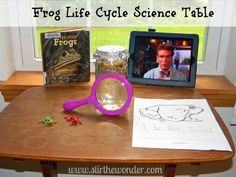 Frog Life Cycle Science Table   Stir the Wonder