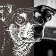 Portraits From Photos, Pet Portraits, Your Photos, Boston Terrier, Hand Drawn, How To Draw Hands, Vibrant, Pencil, Hand Painted